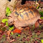 La tartaruga di Adriana Pannitteri