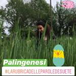 La parola desueta: Palingenesi